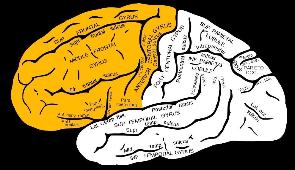 あなたは「右脳派」かそれとも「左脳派」か?|ライターとして適正があるのはどっち?